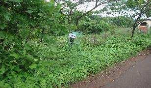 affordable plot for sale at sancoale south goa