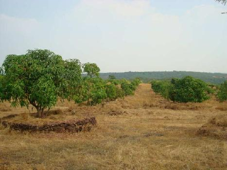 Agriculture Land For Sale In Devgad Village,Sindhudurg