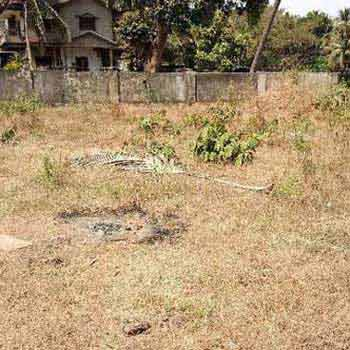 Residential Plot for Sale in Candolim, Goa