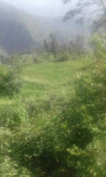 Commercial Land For Sale In Hathi Barkala , Dehradun