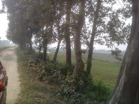 Agricultural/Farm Land for Sale in Purnia