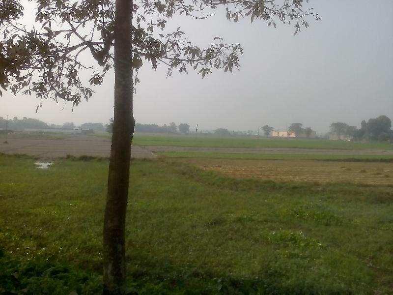 Agricultural/Farm Land for Sale in Kasba Purnia, Purnia