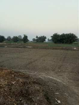 Agricultural/Farm Land for Sale in Manihari, Katihar
