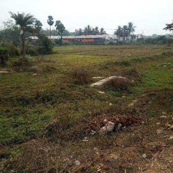 Agricultural/Farm Land for Sale in Ganjam