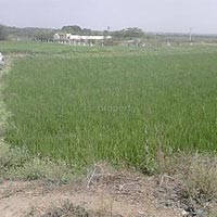 Farm Land for Sale At Shad Nagar