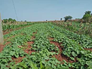 122 Acre Agricultural/Farm Land for Sale in Zaheerabad, Hyderabad