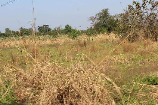Agricultural Land for sale at Raigad