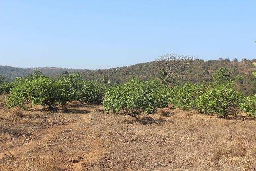 Agricultural/Farm Land for Sale in Mangaon, Raigad
