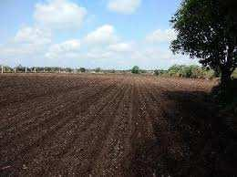 Residential Plot for Sale in Chhatabar, Bhubaneswar