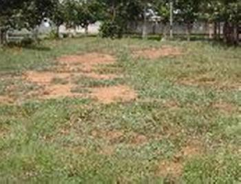 Residential Plot For Sale In Bangalore