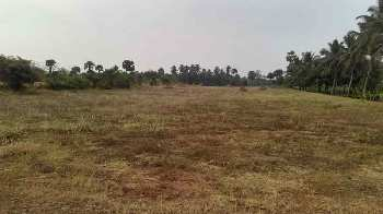 50 Cent Commercial Lands /Inst. Land for Rent in Kozhinjampara, Palakkad