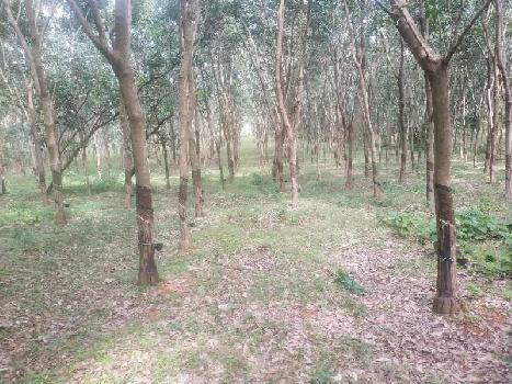 1.20 Acre Agricultural/Farm Land for Sale in Vadakkencherry, Palakkad