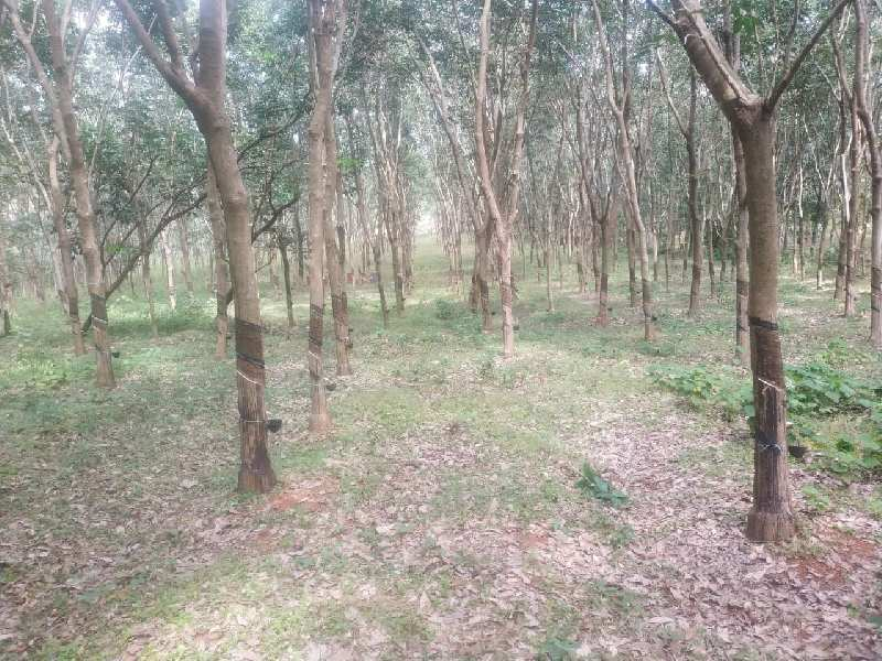 1.20 Acre Agricultural/Farm Land for Sale in Kerala