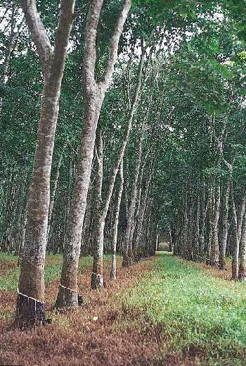 180 Cent Agricultural/Farm Land for Sale in Ottapalam, Palakkad