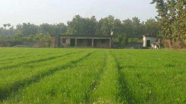 Agricultural Land for Sale in Biharigarh