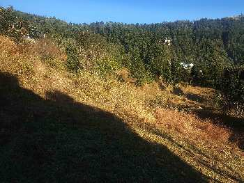 16 Bigha Agricultural/Farm Land for Sale in Mashobra, Shimla