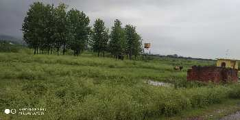 15 Bigha Agricultural/Farm Land for Sale in Paonta Sahib, Sirmaur