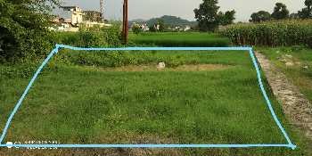 4.50 BISWA ( 220 Sq. Yards ) FOR SALE AT SOURYA COLONY PAONTA SAHIB.