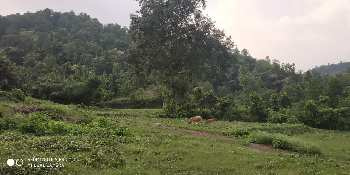 20 BIGHA AGRICULTURE LAND FOR SALE IN NEAR KOLLAR PAONTA SAHIB.