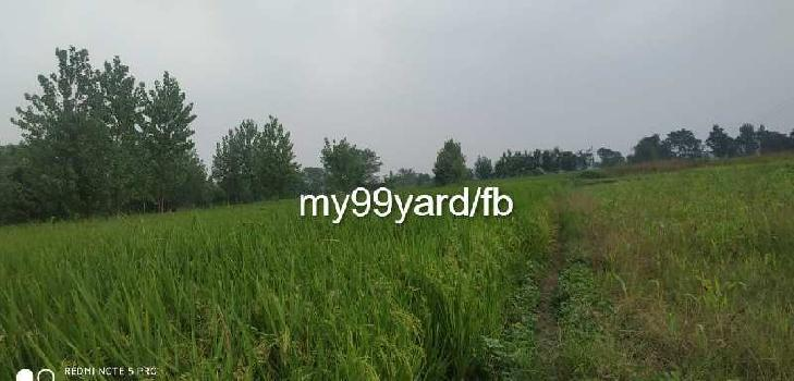 22 Bigha Agricultural/Farm Land for Sale in Paonta Sahib, Sirmaur