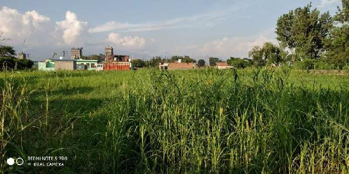38 Biswa Commercial Lands /Inst. Land for Sale in Paonta Sahib, Sirmaur