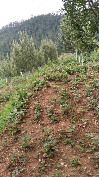 13 Bigha Agricultural/Farm Land for Sale in Main Road, Shimla