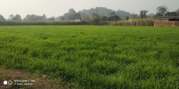 40 Biswa Agricultural/Farm Land for Sale in Paonta Sahib, Sirmaur