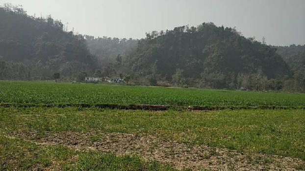 56 Bigha Agricultural/Farm Land for Sale in Paonta Sahib, Sirmaur