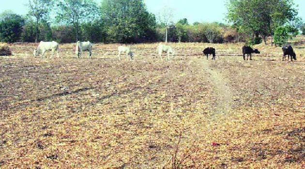 Agricultural/Farm Land for Sale in Madhya Pradesh