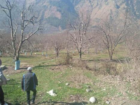 Agricultural Land For Sale In Haripur, Naggar Road, Manali
