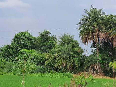 1 BHK Farm House for Sale in Naya Raipur, Raipur