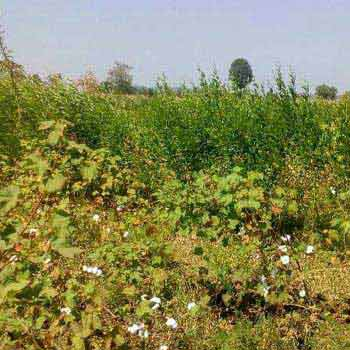 Agricultural/Farm Land for Sale in Narkhed, Nagpur