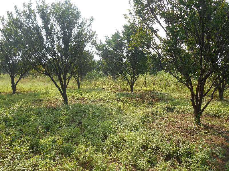 13 acres tar road touch irrigated agricultural land available  on lease