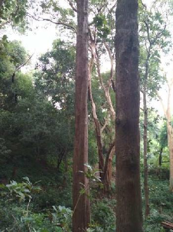 Teak wood property for sale in thirunelveli