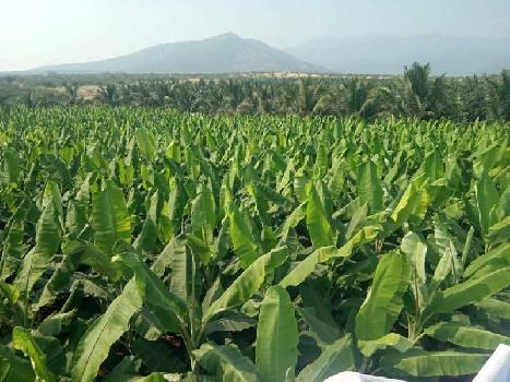 Farm land for sale in bhavani
