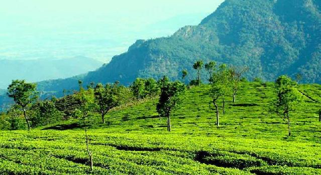 500 acre rea estate for sale in ooty Nilgiris