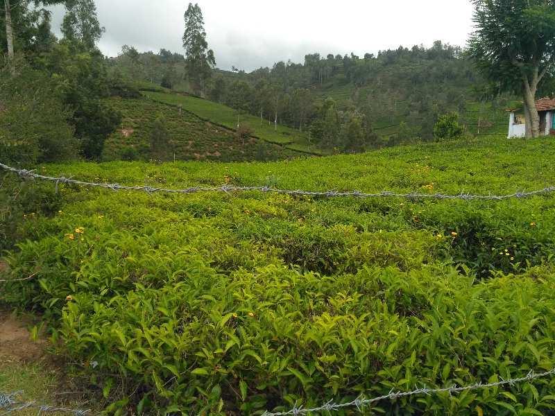 1 acre tea estate for sale in kotagiri
