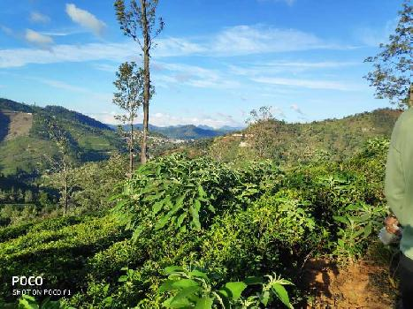 2.5 acres for sale in coonoor