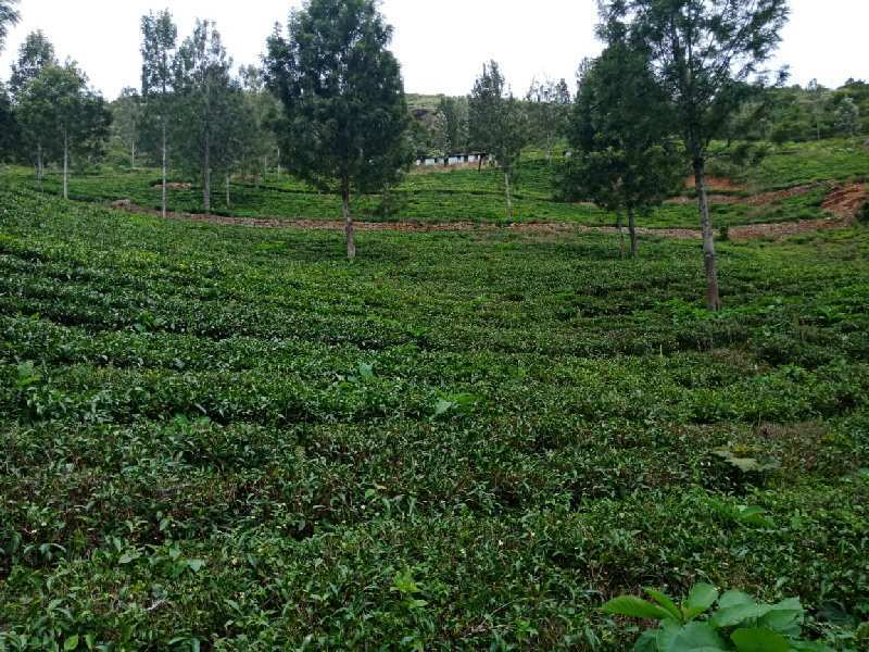 52 acres for sale in kotagiri