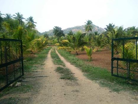 20 acres coconut farm for sale in anaimalai road
