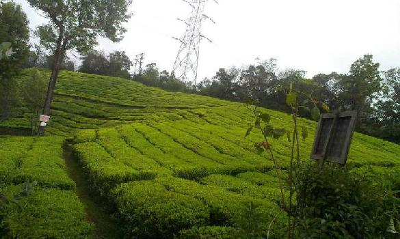 1000 acre farm lands for sale in kerala vandi periyar