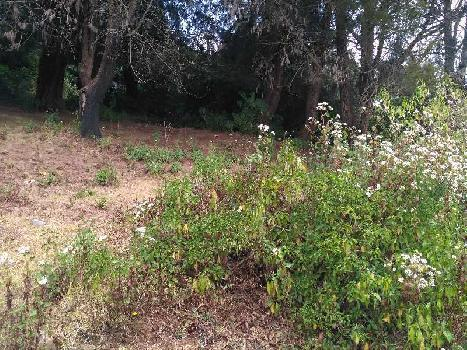 25 cents land for sale in ooty lovedale