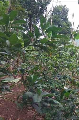 Farm land for sale in kodaikanal
