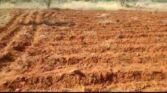 Farm land for sale in thirunelveli