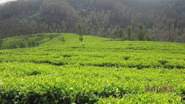 4000 Well maintained tea estates for sale in coonoor area
