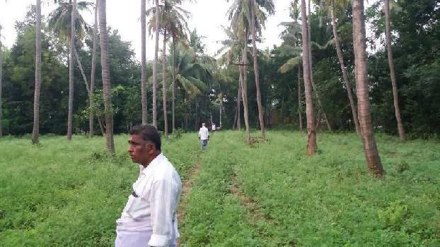 2.5. Acre Coconut Trees Farm Land For Sale in Sathanur, Thiruvaiyar to Thirukattppalli Road, Thanjavur