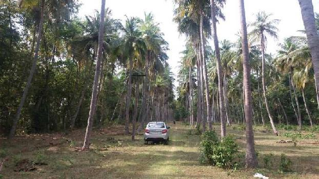 2.5. Acre Coconut Trees Farm Land For Sale in Sathanur, Thiruvaiyar to Thirukattppalli Road, Thanjavur