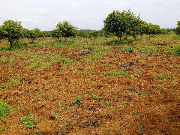 Farm Land For Sale In Bachapally(Nanded Highway), Shankarampet, Nizamsagar