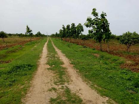Farm Land For Sale In Bachapally(Nanded Highway), Shankarampet, Nizamsagar