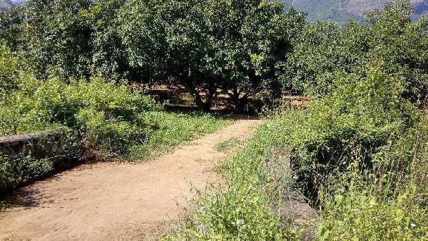 Farm land Agriculture Land
